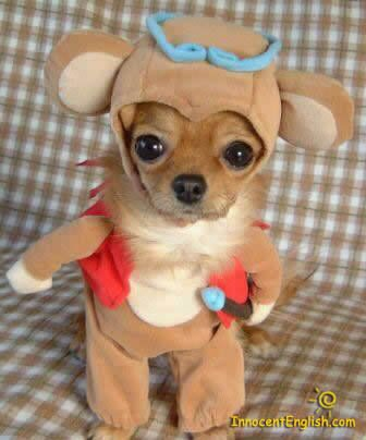 cute puppy in halloween costume clothes suit
