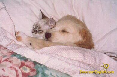 dog and cat cuddling together sleeping
