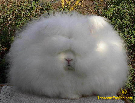 cute furry fluffy bunny fluff ball pet monster