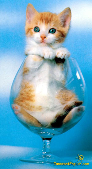 cute Kitty in wine glass