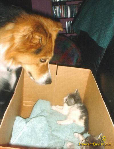 Dog checking out new kitty in box
