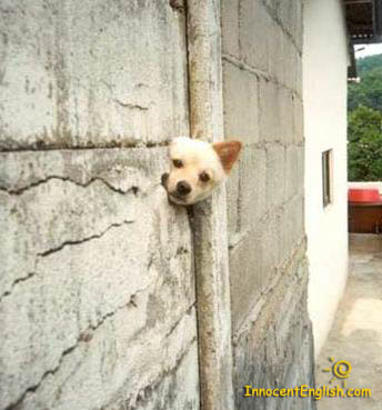 dog poking his head out from hole in building