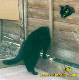 funny cat pic: long neck cat in wall