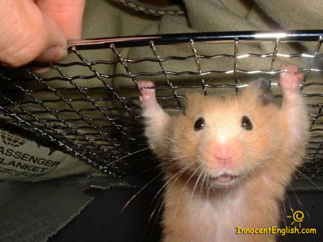 funny cute little hamster standing up