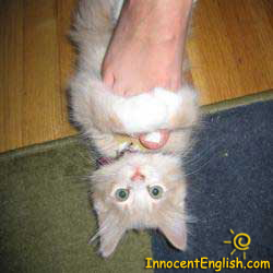 cute kitten grabbing foot like a slipper
