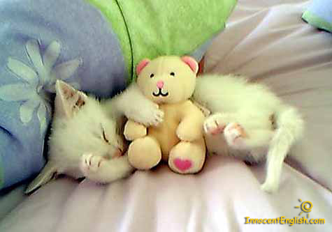 Pic of sleeping cute little white kitten and stuffed animal