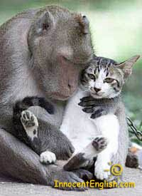 cute monkey holding and hugging kitten