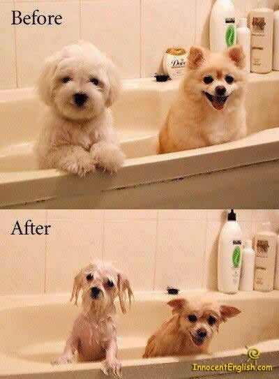cute wet puppies getting a bath