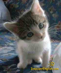 Really cute kitten- curious