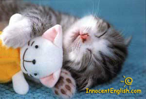 cute kitty sleeping wit a doll