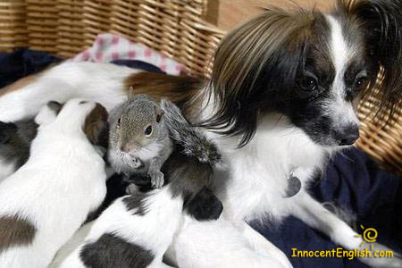cute dog and baby squirrel