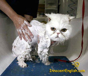unhappy cat getting bath