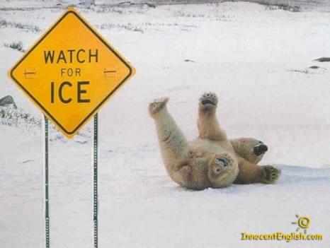 funny polar bear falling on ice