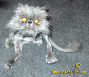 very strange ugly cat