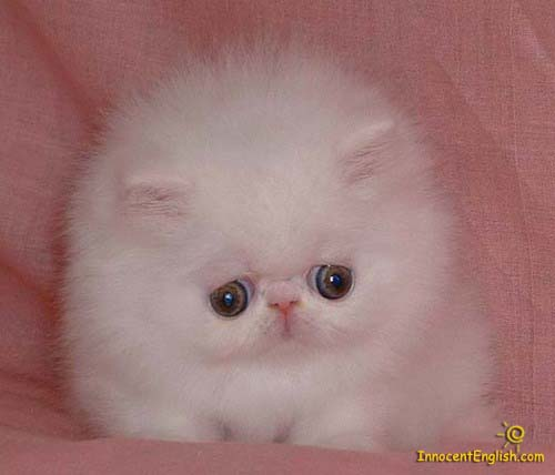 Is this a really cute kitty or just a fluffball?