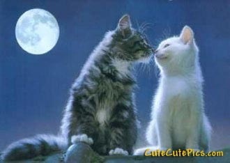 "beautiful kitten picture of two cats ""kissing\"" under the moon"
