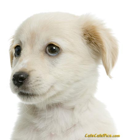 Pic of sweet, cute white puppy
