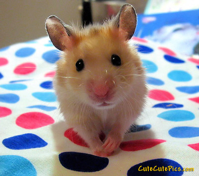 Cute baby mouse picture (playing twister)