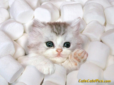 Picture of Really Cute Kitten in Marshmellows