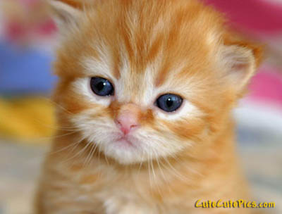 Really cute beautiful orange kitten