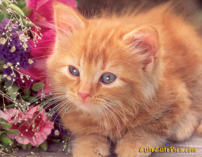 beautiful-kitten-picture