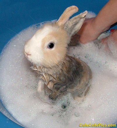 cute-baby-bunny-taking-bath