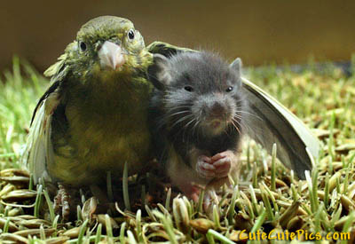 bird-mouse-friends