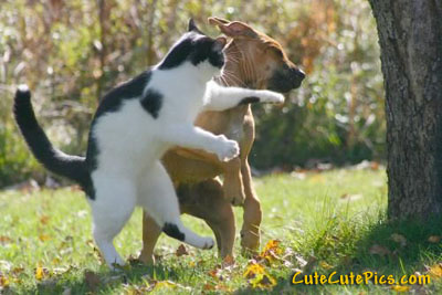 http://www.innocentenglish.com/cute-pictures/wp/wp-content/uploads/2008/05/cat-dog-dancing.jpg