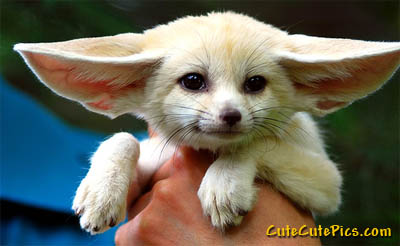 cute-baby-fennec-fox