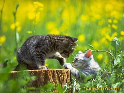 cute-baby-kittens-playing