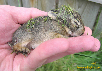 cute-baby-rabbit-sleeping