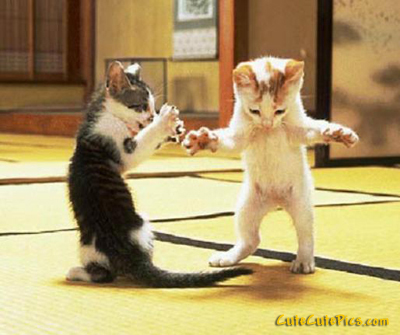 cute-dancing-kittens