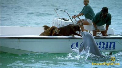 cute-dogs-dolphin-friends