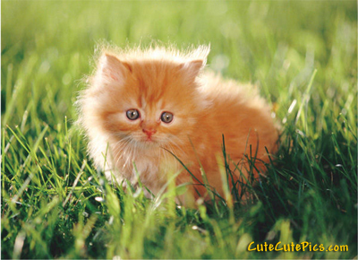 cute-furry-kitten-sunshine