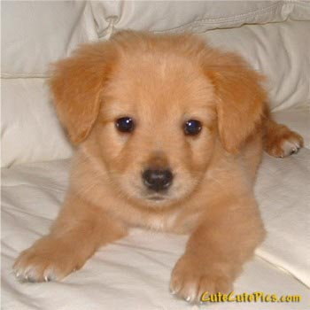 Pictures Puppies on Cute Pictures Of Puppies  Kittens  Baby Animals    Cute And Sweet