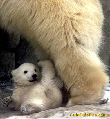 cute-happy-polar-bear-cub