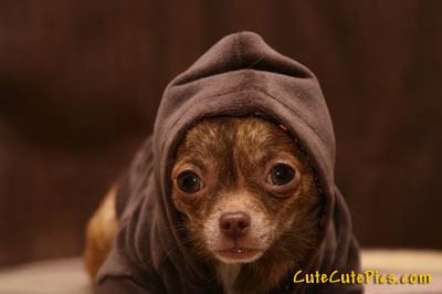 cute-hooded-dog