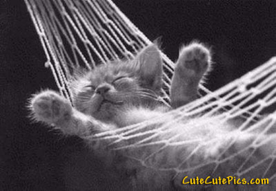 cute-kitten-hammock