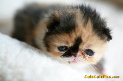 cute-kitten-image