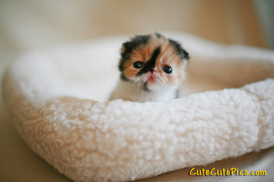 cute-kitten-pic