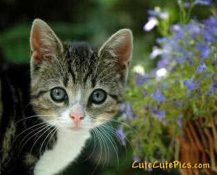 cute-kitten-picture