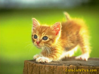 cute-kitten-playing-tag