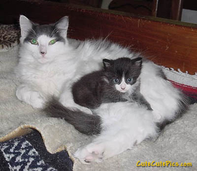 cute-kitten-with-mother-cat