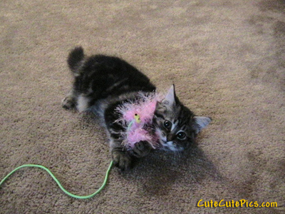 cute-kitten-yarn