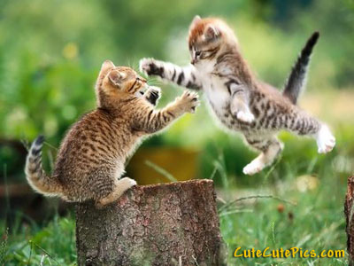 cute-kittens-playing-outside