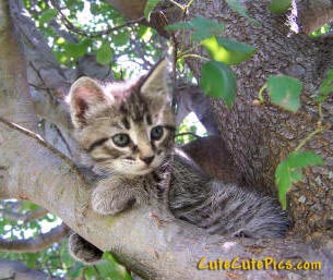 cute-kitty-climbing-tree