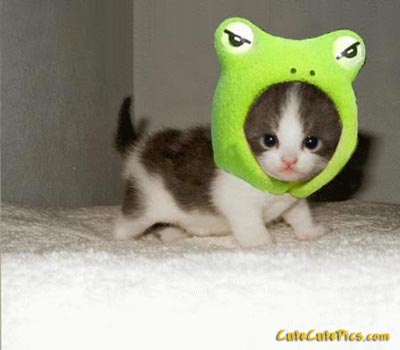 cute-kitty-frog-costume