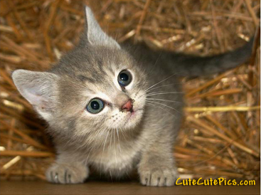 cute-little-kitten-pic