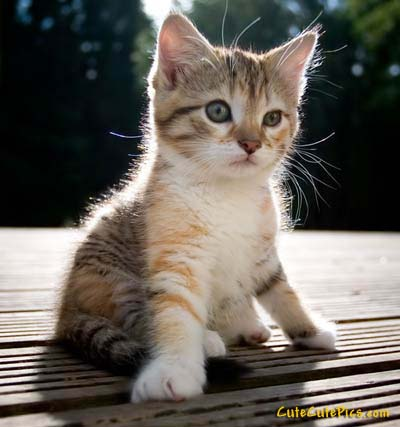 cute-little-kitten