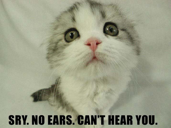 cute lol cat no ears. can\'t hear you.